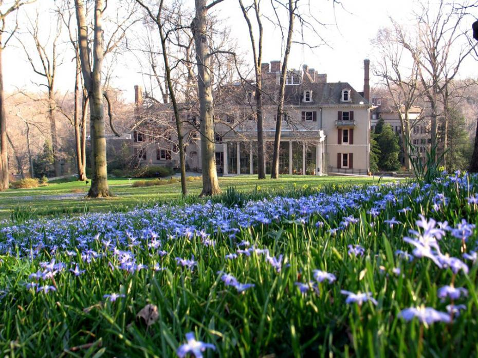 house over field of blue flowers