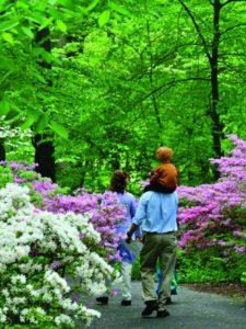 people in azalea woods