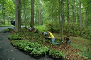planting ground cover
