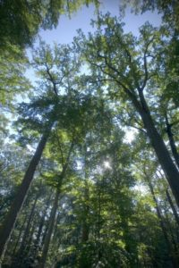 view up to the tree canopy