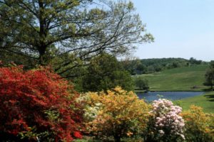 view of azaleas meadown pond path